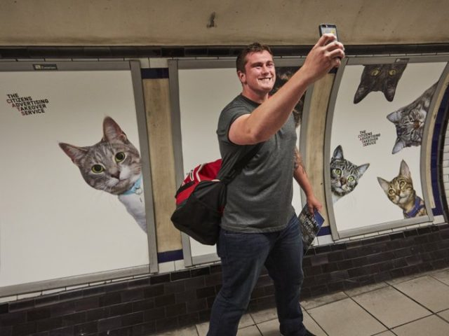 Farewell pubilicity! Cat posters invade the London Underground--3