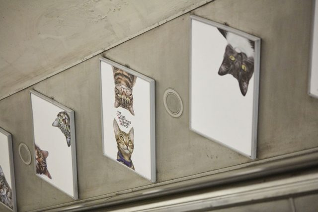 Farewell pubilicity! Cat posters invade the London Underground--5