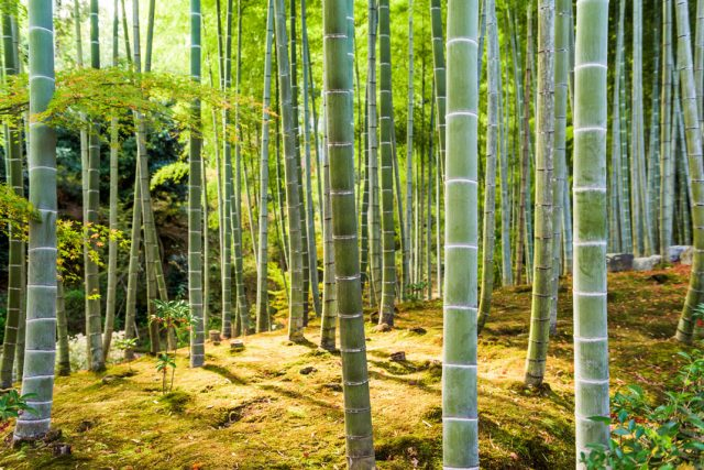 9 FORESTS THAT WILL MAKE YOU COMMUNE WITH NATURE--5