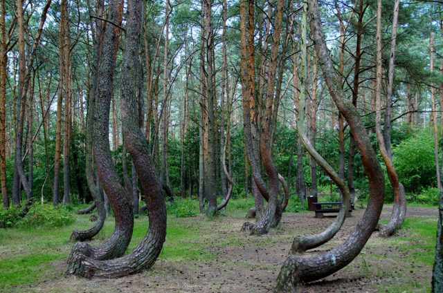 9 FORESTS THAT WILL MAKE YOU COMMUNE WITH NATURE-