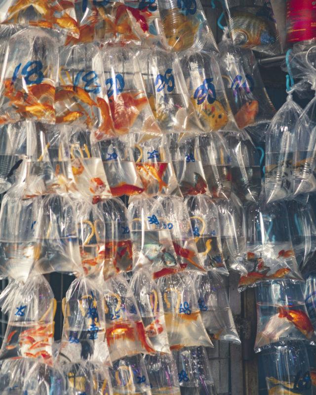 14 Fish Market