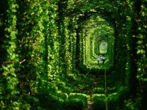 The Tunnel of Love in Ukraine.