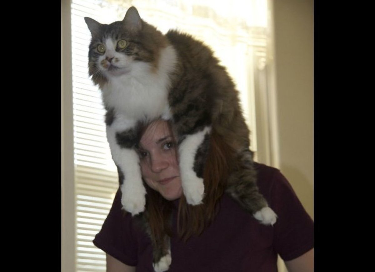 Funny Pictures Of Cats In Hats