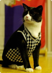 The Top Cat Sweater Designs