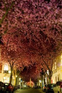 Street Bonn, Germany