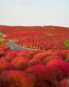 Hitachinaka Park, Japan