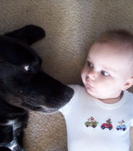 Cats and dogs making funny expressions like humans