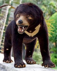 A badly stuffed bear