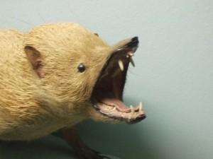 A badly stuffed animal