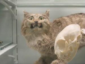 A badly stuffed cat