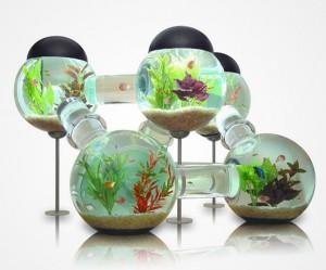 wonderful aquarium