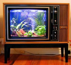 T.V style aquarium