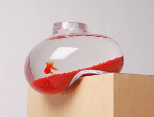 Bottle use as aquarium