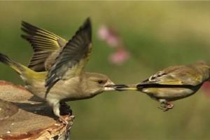 bird takeoff