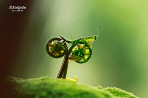 grasshopper seems as ridiing over a plant cycle