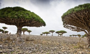 Bizarre Landscapes Of Socotra Island 1