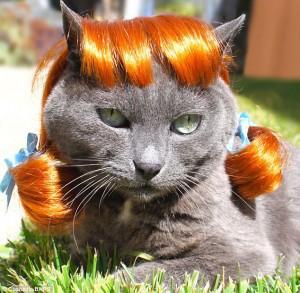 Halloween Cat Disguises 11