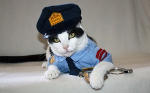 Halloween Cat Disguises 17