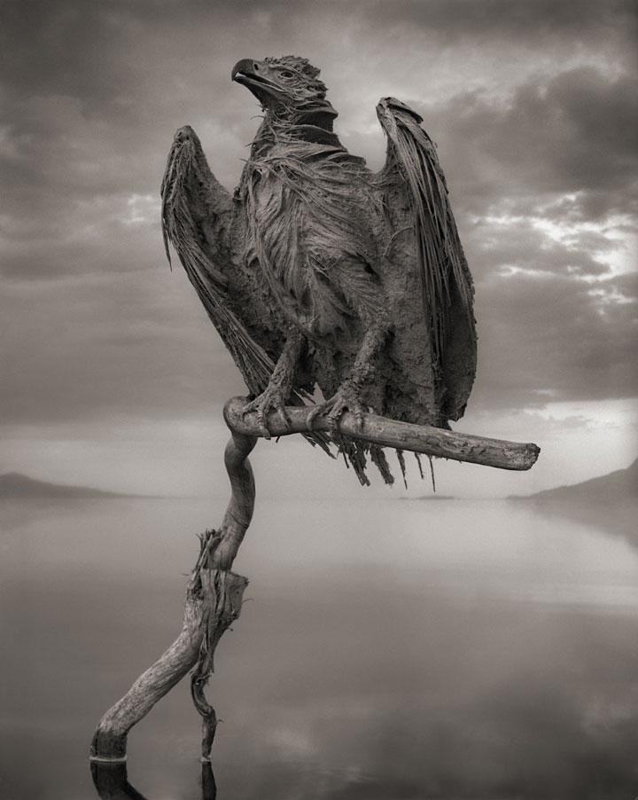 Lake Natron Killer Lake That Petrifies Animals 5