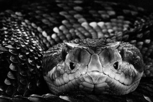 Reptiles-Mysterious Beauty Of Animals Captured In Striking Portraits-36