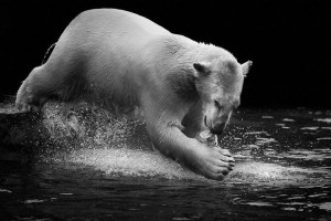 Bears-Mysterious Beauty Of Animals Captured In Striking Portraits-7