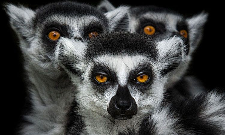 Mysterious beauty of animals in portraits-