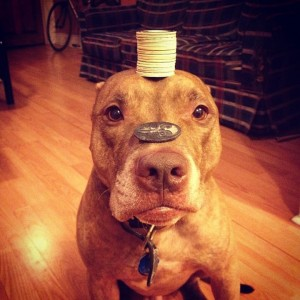 A Dog Owner Takes Funny Photos Of Its Dog By Putting Various Objects On Its Head-1