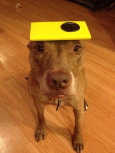 A Dog Owner Takes Funny Photos Of Its Dog By Putting Various Objects On Its Head-10