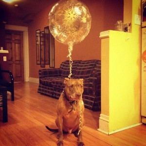 A Dog Owner Takes Funny Photos Of Its Dog By Putting Various Objects On Its Head-11