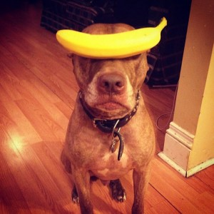 A Dog Owner Takes Funny Photos Of Its Dog By Putting Various Objects On Its Head-12