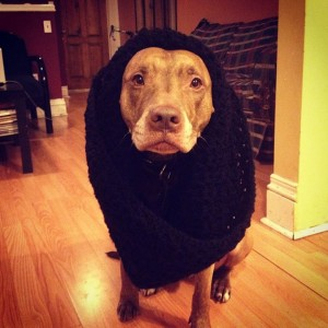 A Dog Owner Takes Funny Photos Of Its Dog By Putting Various Objects On Its Head-17