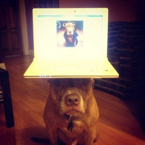 A Dog Owner Takes Funny Photos Of Its Dog By Putting Various Objects On Its Head-18