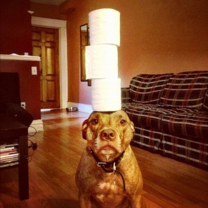 A Dog Owner Takes Funny Photos Of Its Dog By Putting Various Objects On Its Head-2