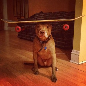 A Dog Owner Takes Funny Photos Of Its Dog By Putting Various Objects On Its Head-7