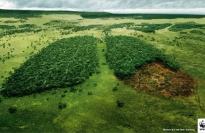 20 Most Striking WWF Posters That Will Motivate You To Fight For The Planet-12