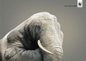 20 Most Striking WWF Posters That Will Motivate You To Fight For The Planet-6
