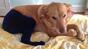 Pet Wearing Tights: New Crazy Fashion On Internet -