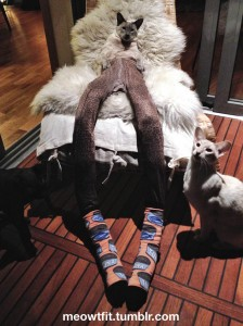 Pet Wearing Tights: New Crazy Fashion On Internet -10