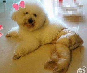 Pet Wearing Tights: New Crazy Fashion On Internet -15