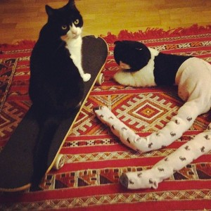 Pet Wearing Tights: New Crazy Fashion On Internet -7