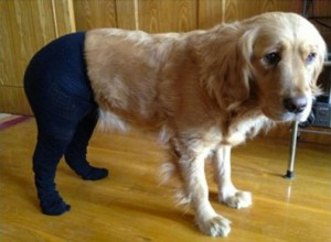Pet Wearing Tights: New Crazy Fashion On Internet -8