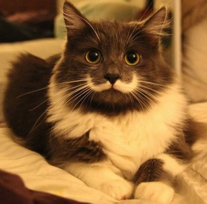 12 Unique Cats In The World Because Of Unique Markings On Their Fur-