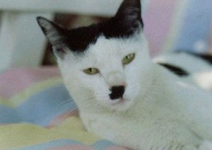 12 Unique Cats In The World Because Of Unique Markings On Their Fur-10