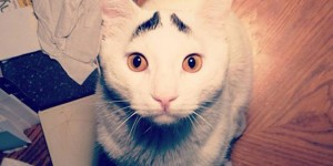 12 Unique Cats In The World Because Of Unique Markings On Their Fur-4