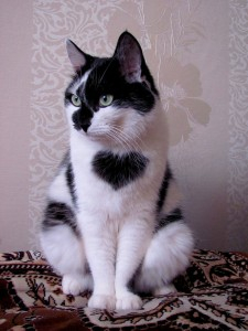 12 Unique Cats In The World Because Of Unique Markings On Their Fur-6