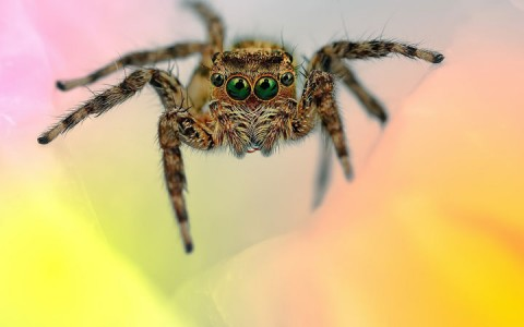 Discover the Beauty Of Spiders Through Microscopic Photographs-