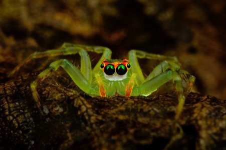 Discover the Beauty Of Spiders Through Microscopic Photographs-1