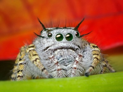 Discover the Beauty Of Spiders Through Microscopic Photographs-10