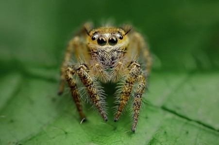Discover the Beauty Of Spiders Through Microscopic Photographs-11