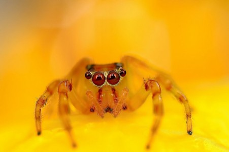 Discover the Beauty Of Spiders Through Microscopic Photographs-13